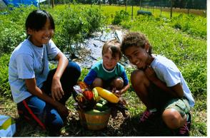 "Sunset Vista Community Garden & Learning Center to Hold  Annual ""Family Garden Dinner"" Fundraiser , photo 2"