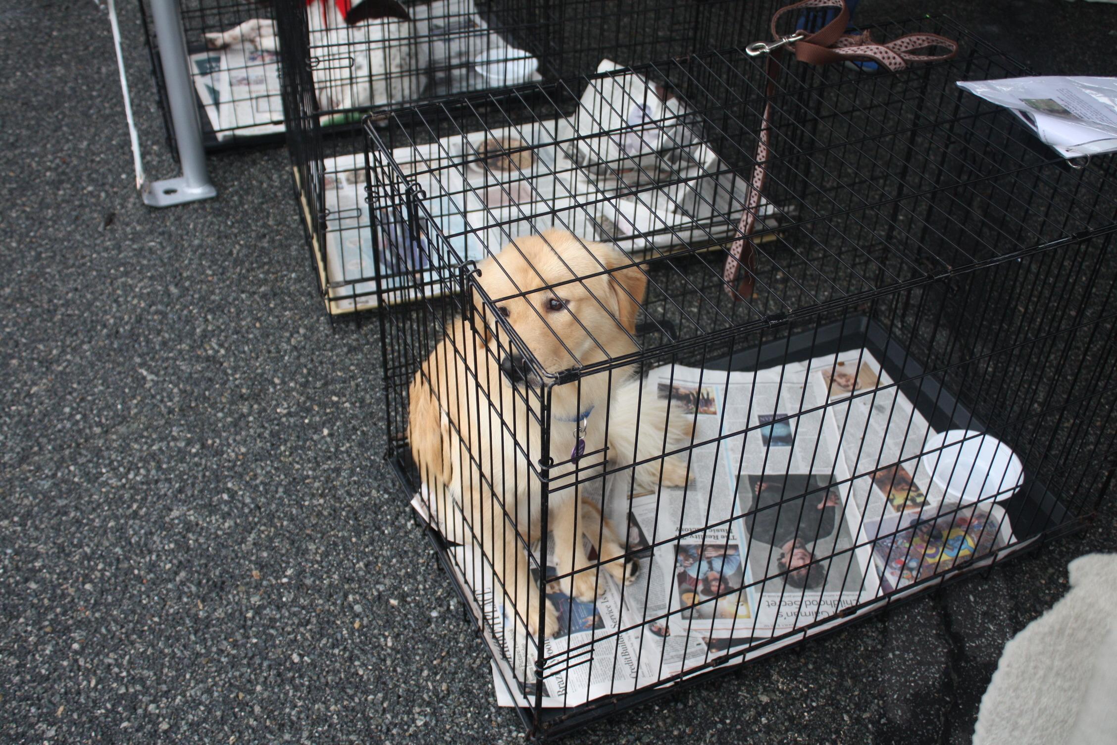 3a4f035f90ee6321f725_dogs_015.JPG