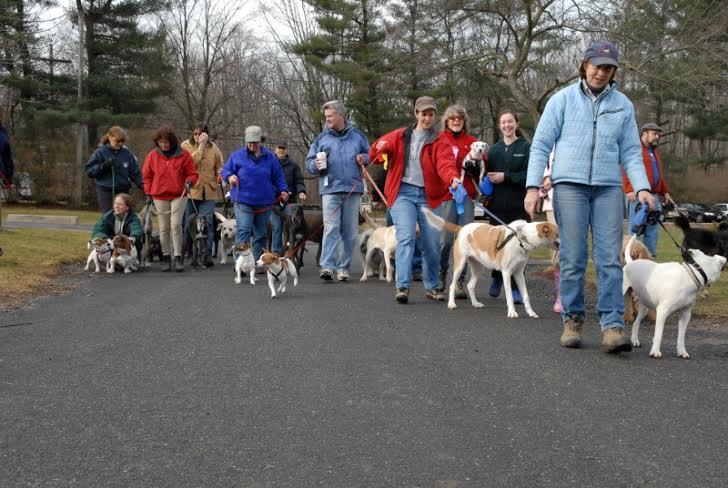 Dog Day Care Basking Ridge Nj