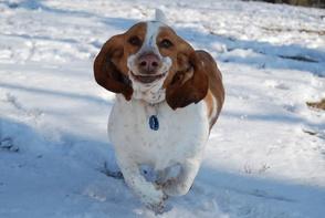 Carousel_image_17e15709564153ed43b5_snow_dog