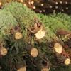 Small_thumb_ba12951b31b5ecfd3b65_christmas_tree_sales