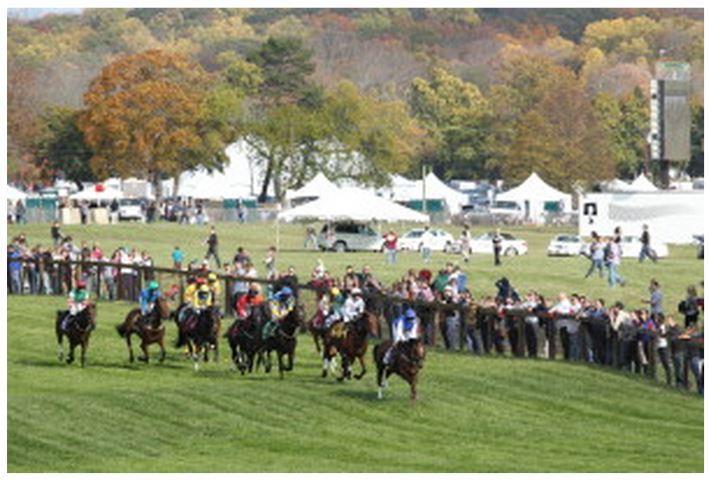 8ea152a7aaca91a81f9a_horses_1.JPG