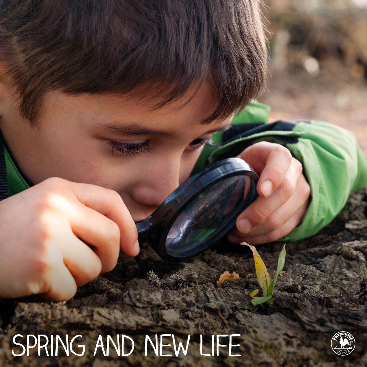 9a03684857e82f4b5fe9_Spring_and_New_Life_Facebook_Wall_Graphic.jpg