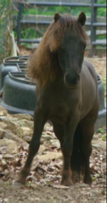 Carousel_image_62646c774e2365584e44_mini-horse