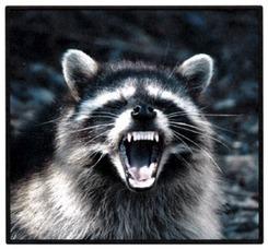 408c49663c199194c6d2_raccoon.jpg