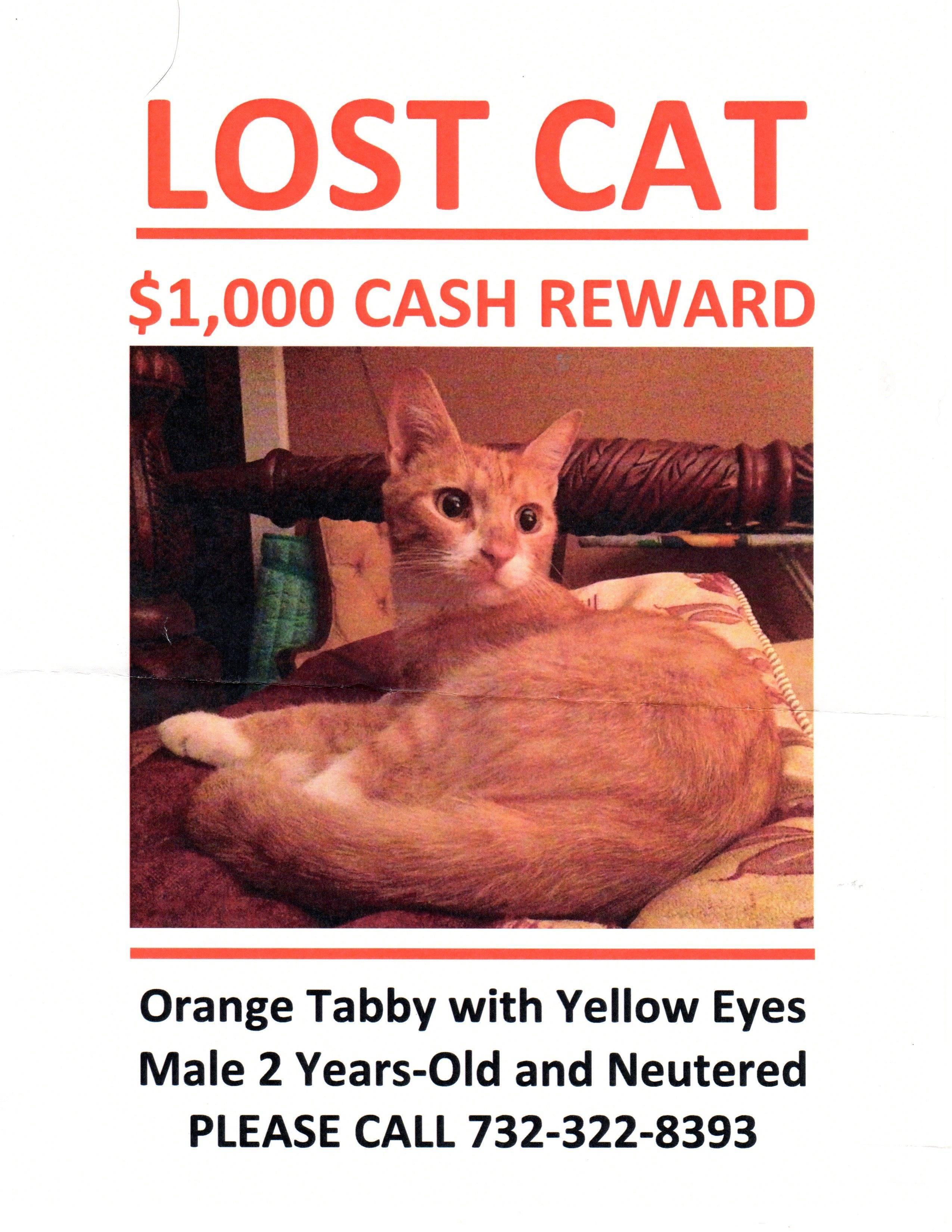 afeb66f4658ddd3f5866_img_Missing_Cat001.jpg