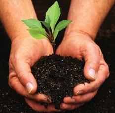 Planting, photo 1