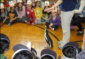 Harrison Elementary School Students Learn About Penguins via a Real Live Penguin