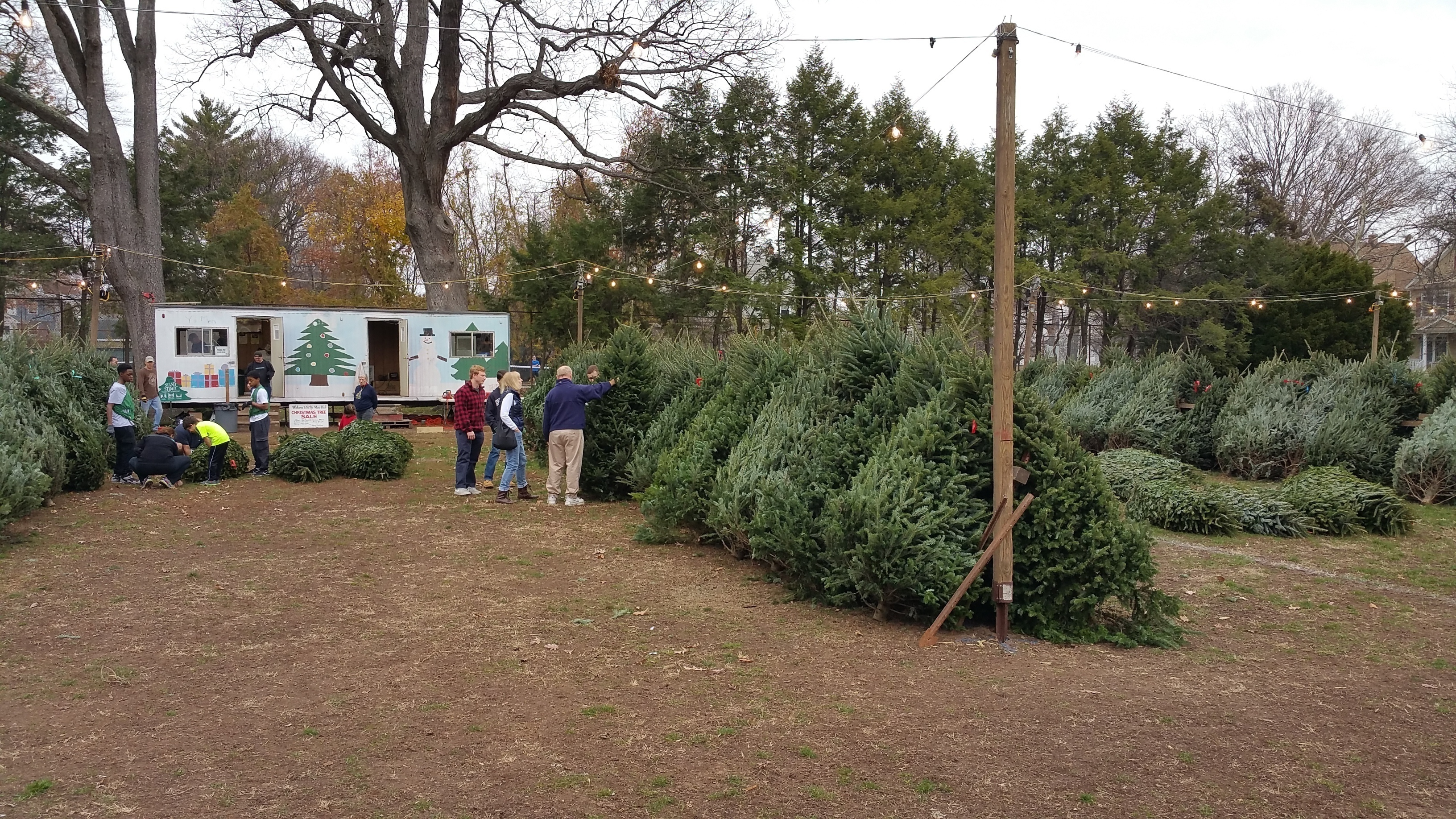 christmas trees sale - Christmas Trees Sale