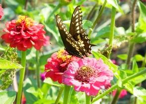 Carousel_image_356b43f60c1ead2995ed_butterfly