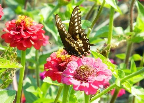 Top_story_356b43f60c1ead2995ed_butterfly
