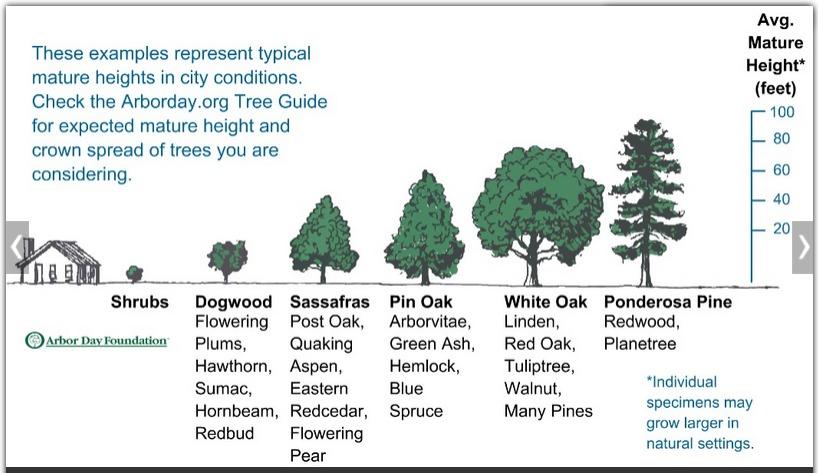 15bd32e26fc134d3bf93_tree_1.PNG