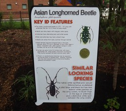 Invasive Pest Exhibit