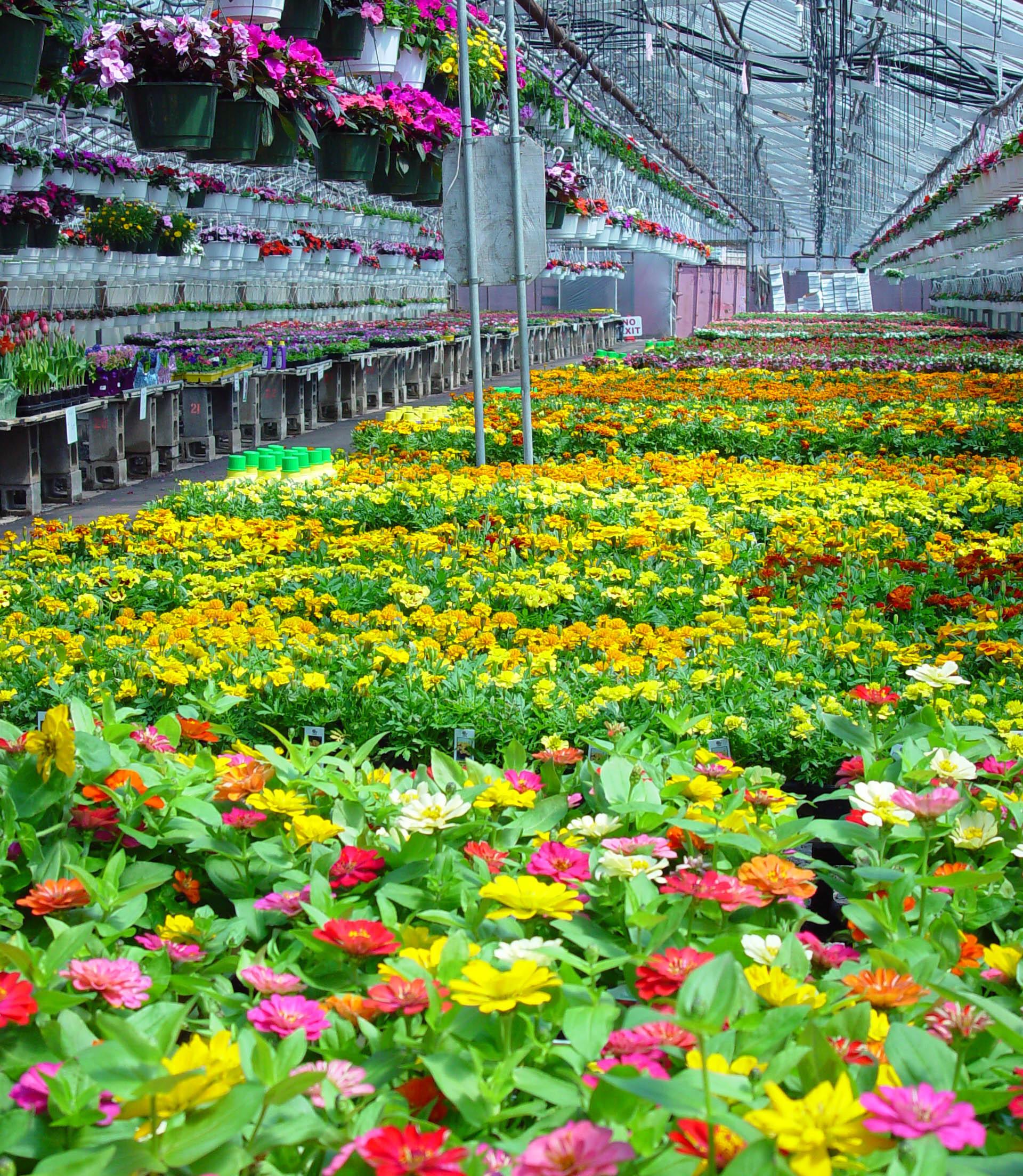 179fedd2442becc259f4_Parker_Gardens_greenhouse_5-7-14.jpg