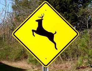 Randolph Wildlife Committee Sees Less Deer, photo 1