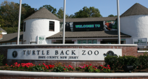 Docent Volunteer Positions Available at Turtle Back Zoo, photo 1