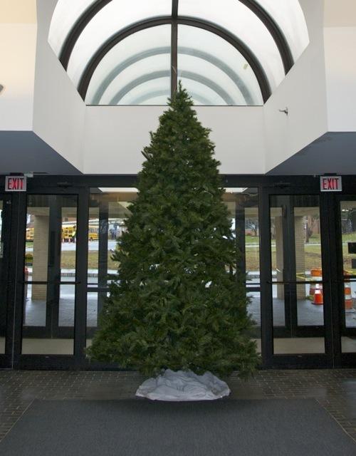 b86769155816f5367497_christmas_tree.jpg