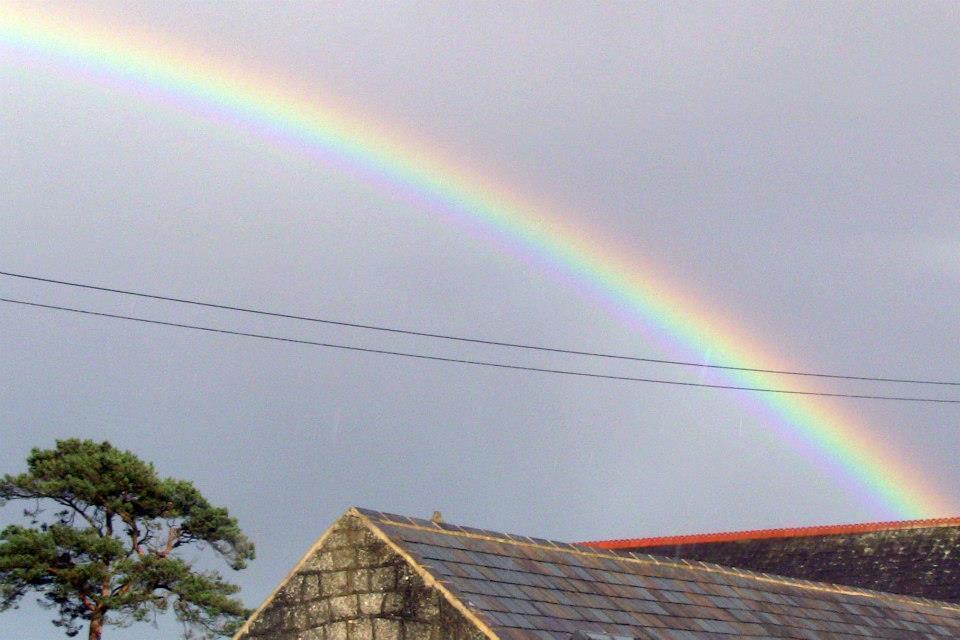 9000a6d1d0d099ef4685_Rainbow.jpg