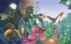 a1a01832236d2216da8e_pollinator.jpg
