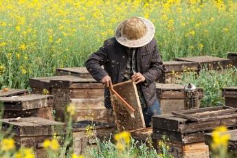 Top_story_31d77a422605ff3c2b18_beekeeper