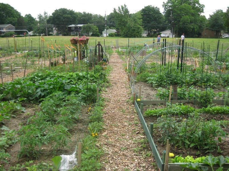 216c8c91a228cc816316_garden_plots.jpg