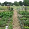 Small_thumb_216c8c91a228cc816316_garden_plots