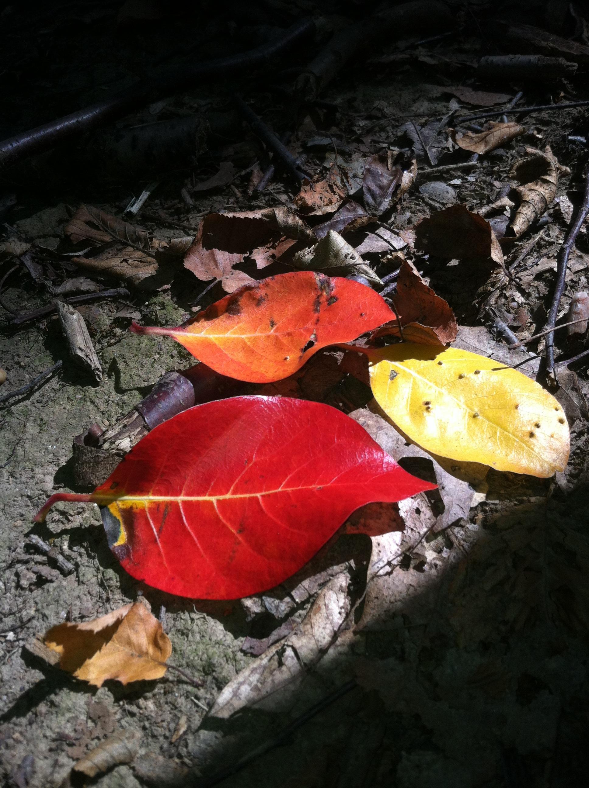 a6b5763e98ba7fdadc04_Photo_workshop_2_Nov_8_-_fall_colors.JPG