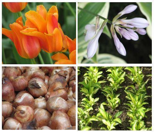 a8736e590c2ef77b20eb_Master_Gardeners_bulbs_via_USDA.JPG