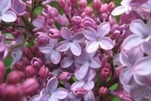 Carousel_image_3551897377eed368f818_d7226f1e11c8f0a16ba9_every-day-in-the-garden