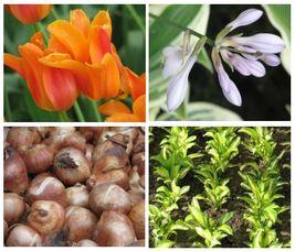 Carousel_image_a8736e590c2ef77b20eb_master_gardeners_bulbs_via_usda