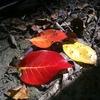 Small_thumb_a6b5763e98ba7fdadc04_photo_workshop_2_nov_8_-_fall_colors