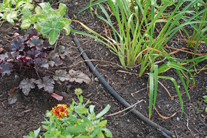 Don't Let Summer Droughts Stop You from Gardening, photo 1