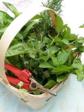 County to Host Workshop on How to Preserve Your Herb Harvest, photo 1
