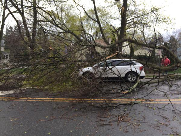 6a9c3353c5c0a20c4d85_car.tree.jpg