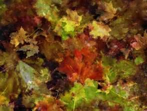 Autumn Leaves #3