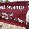 Small_thumb_30ad94adf0132c7ec305_swamp