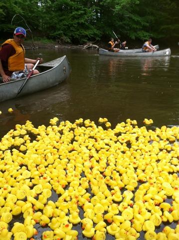The Ducks Are Coming! The Ducks Are Coming! - Berkeley Heights NJ ...