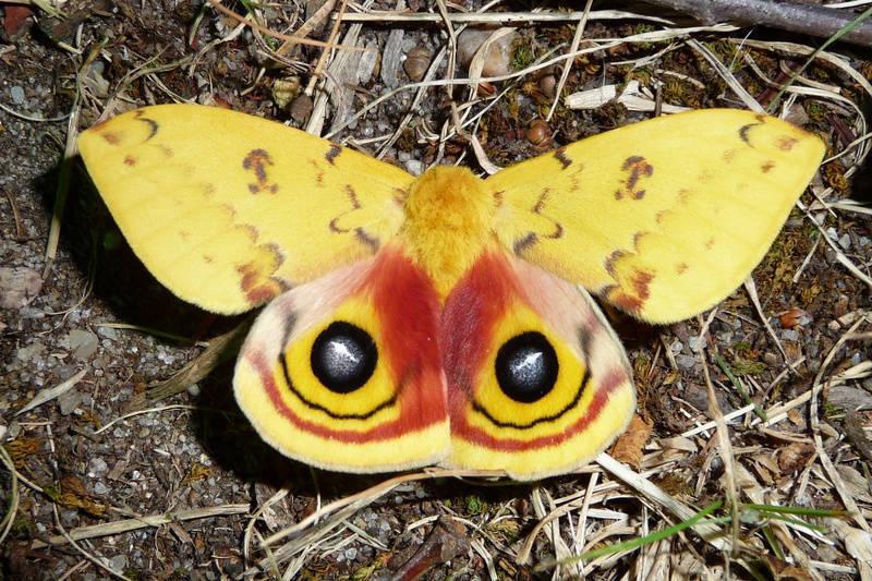 4de13e6970541cae0c48_IO_moth__2_.jpg