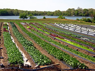 Top_story_c26004066985953ee306_farms