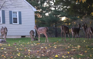 02d51fea2069e06f1669_Deer_herd_in_NJ.jpg