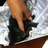 Small_thumb_46764ede5cbd90db1637_tank_kitten