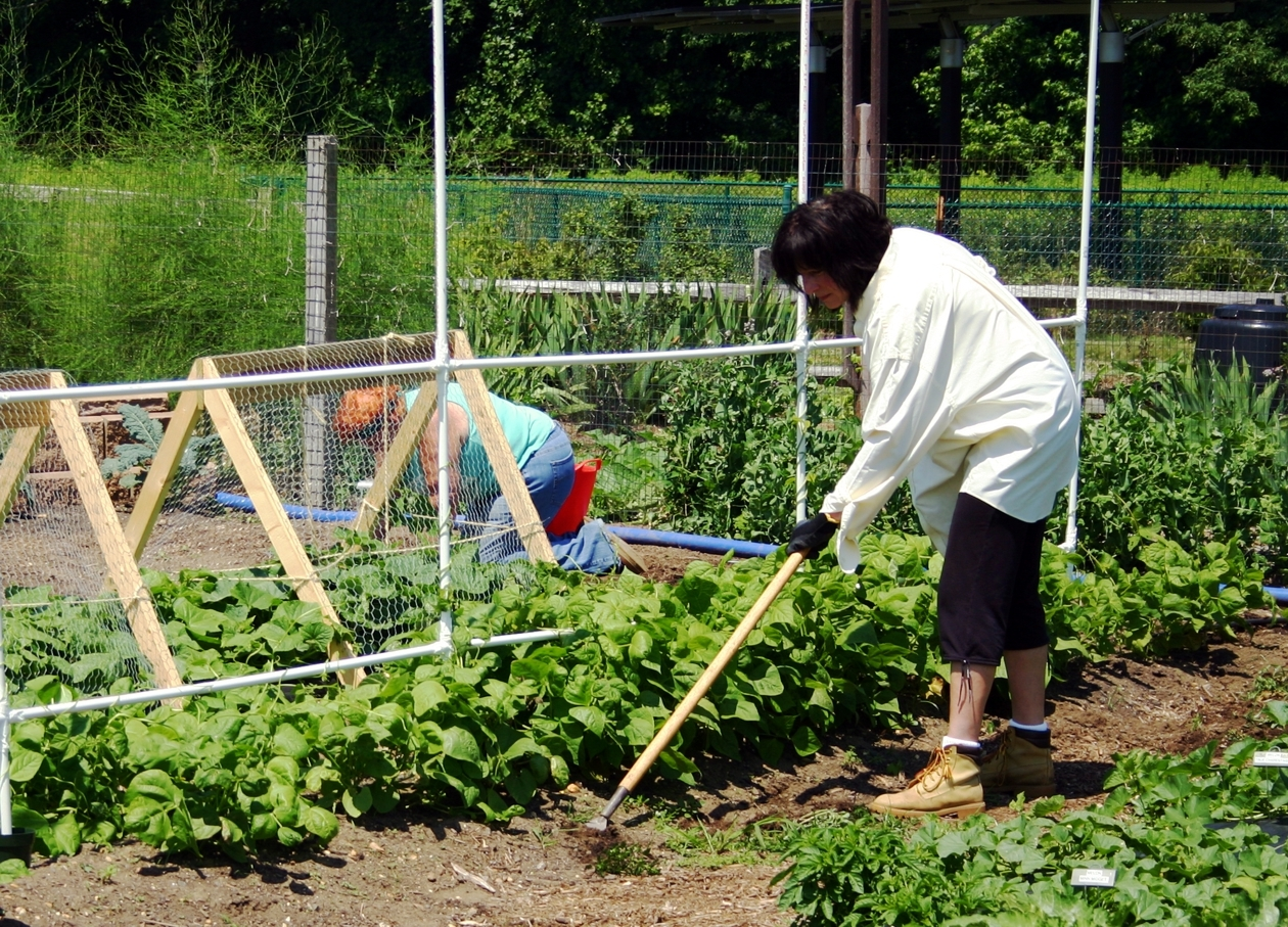 f3973fbfa736ea5479af_Master_Gardeners_Till_the_Soil.jpg