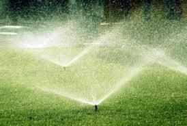 8b7ab32ae7adac23f817_watering.jpeg