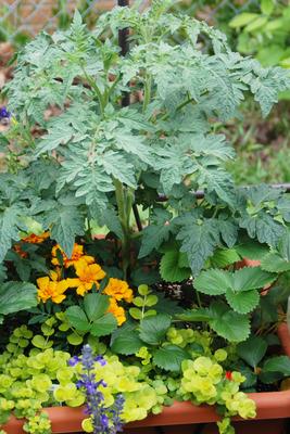 Garden In a Pot