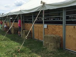 Horses Tent