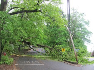 Top_story_a152afa091f6d641521d_tree_down