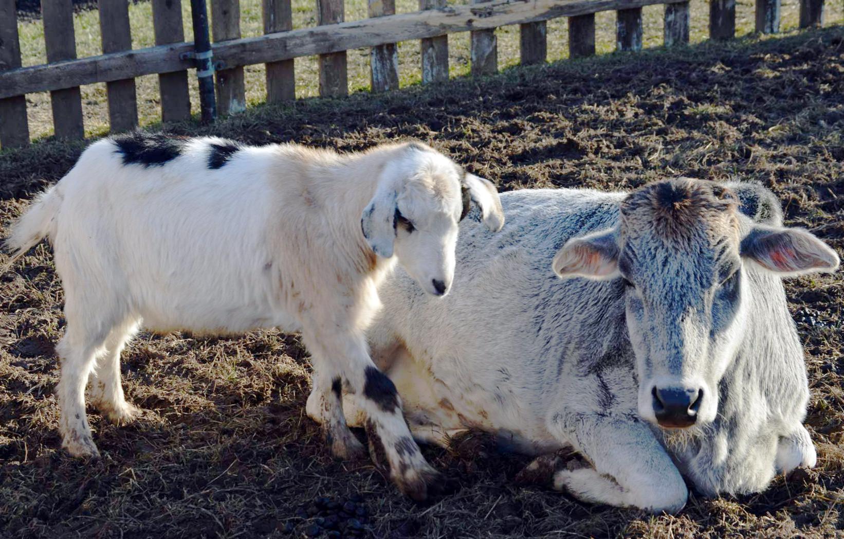 9d08181939f03b9f2678_Sheep_12-27-14.jpg