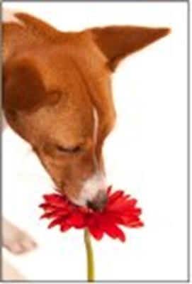 Carousel_image_49bcf62dcefec1e9978c_springdog
