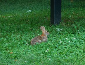 Esposito - Bunny