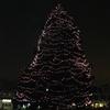 Small_thumb_cc3f38d1e5984d0afa10_tree_lighting